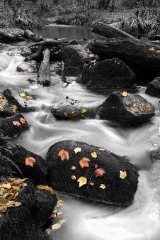 Free Autumn River Stock Image - 16910691