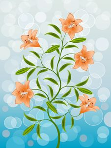 Free Lily Royalty Free Stock Images - 16911029