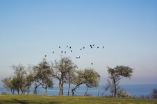 Free Flock Of Birds Above The Trees Stock Photography - 16913512