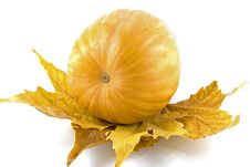 Free Pumpkin Royalty Free Stock Image - 16913786