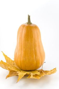 Free Pumpkin Royalty Free Stock Photography - 16913797
