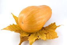 Free Pumpkin Stock Photos - 16913813
