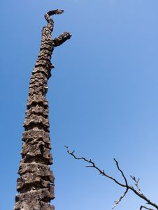 Dead Burnt Tree Royalty Free Stock Photography