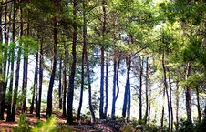 Free Forest Stock Photo - 16914620