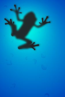 Free Frog Stock Photography - 16915782