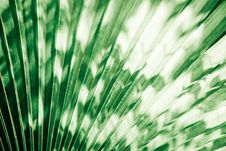 Free Palm Leaf Royalty Free Stock Images - 16915809