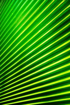 Free Palm Leaf Stock Photo - 16915830