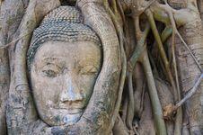 Free Buddha Head Stock Photo - 16916040