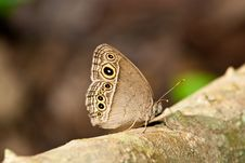 Free Butterfly In Pang Si-Da National Park Stock Photos - 16916043