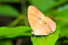 Free Butterfly In Pang Si-Da National Park Royalty Free Stock Photos - 16916108