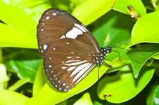 Free Butterfly In Pang Si-Da National Park Stock Images - 16917224