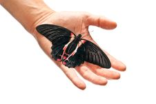 Free Black And Red Butterfly Stock Images - 16918444