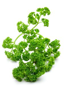 Free Parsley Stock Photos - 16918453