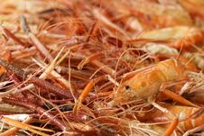 Free Grilled Shrimp Royalty Free Stock Photo - 16919195
