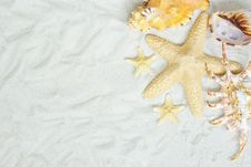 Free Shells On Beach Royalty Free Stock Photo - 16926035
