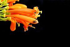 Free Fly On Orange Flower Stock Photo - 16926140