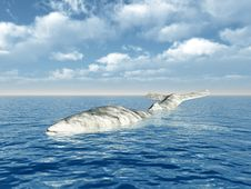 Free A White Whale Royalty Free Stock Images - 16927249