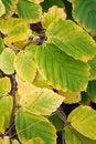 Free Green And Yellow Sheet Royalty Free Stock Photo - 16934655