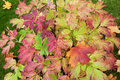 Free Autumn Sheet On Green Herb Stock Photography - 16934682