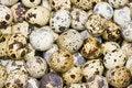 Free Quail Egg Royalty Free Stock Images - 16936819