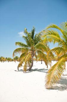 Free Palm Trees Stock Photo - 16931340