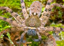 Free Wolf Spider Stock Photography - 16932332