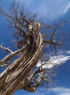 Free Dead Tree Royalty Free Stock Images - 16932599