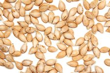 Free Pumpkin Seed Stock Photos - 16935023