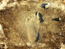 Free Footprint Stock Images - 16936414