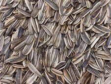 Free Sunflower Stock Photo - 16936480