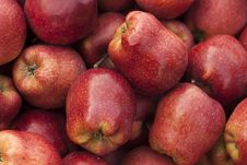 Free Red Delicious Apple Royalty Free Stock Images - 16936919