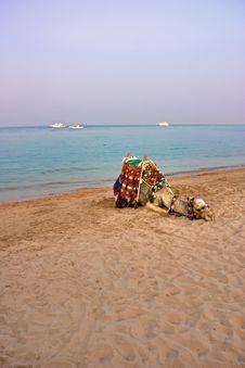 Free Lying Camel Are Waiting New Tourist Season Royalty Free Stock Photo - 16937105