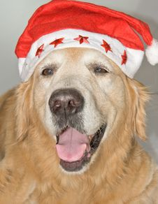 Dog With Santa S Hat. Stock Images