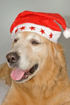 Dog With Santa S Hat Royalty Free Stock Image