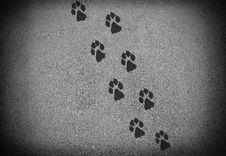 Free Dog Track Royalty Free Stock Photography - 16937637