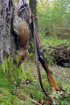 The Catch Widgeon. Stock Images