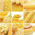 Free Fresh Corn, Preserved Corn And Popcorn Royalty Free Stock Photography - 16943347