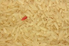 Free Red Rice Royalty Free Stock Photo - 16942715