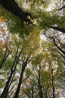 Free Trees Stock Photo - 16944290