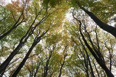 Free Trees Stock Image - 16944451