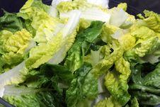 Free Lettuce Royalty Free Stock Image - 16946586