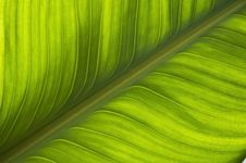 Free Green Leaf Pattern Background Stock Images - 16947604