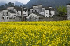 Free Villages Surrounded By Flower Stock Photo - 16948050