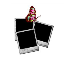 Free Photo Frames With Butterfly Stock Photography - 16949582