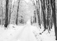 Free Winter Road To Wood. Stock Photos - 16949633