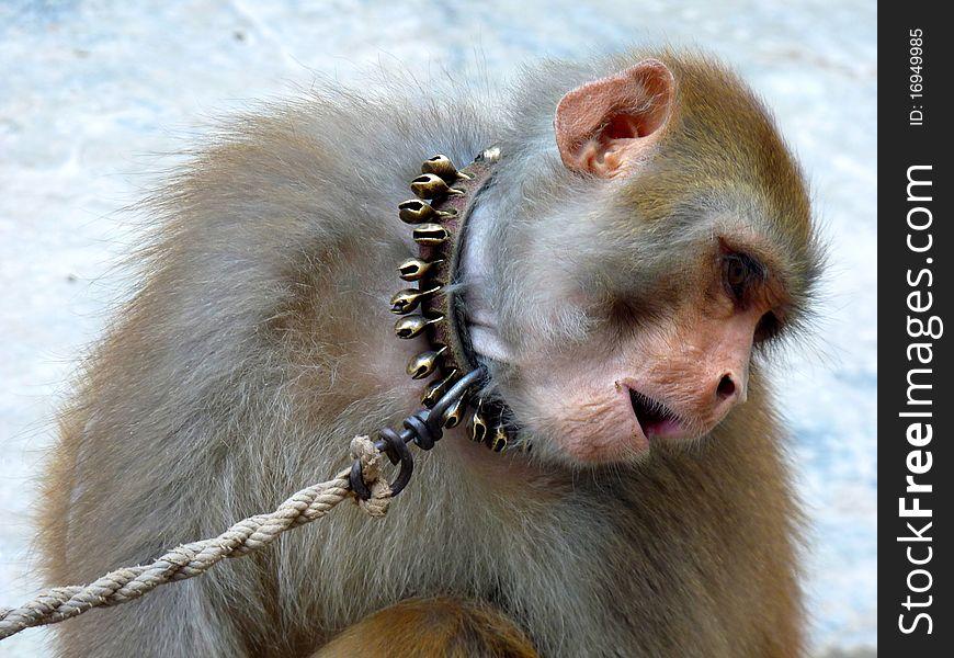 Monkey Shyness
