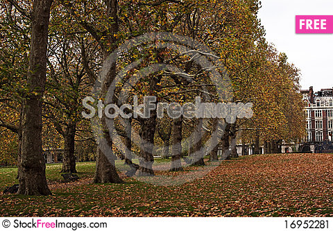Free Yellow Trees In Green Park Park Stock Image - 16952281