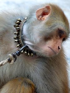 Monkey With Sad Expressions Stock Images