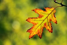 Free Autumn, Colorful Leaves Stock Photo - 16950400