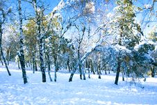 Free A View On A Snowy Forest Royalty Free Stock Photo - 16952825